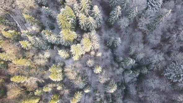 Thumbnail for Over a Frosty Forest