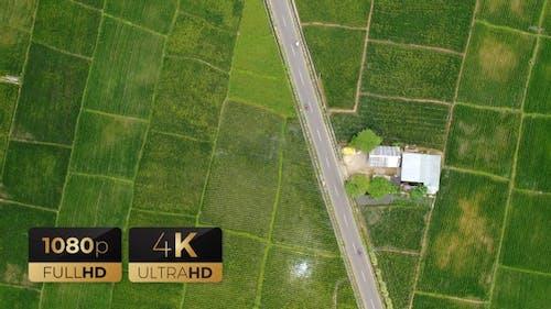 AH - Top View Rice Fields 01