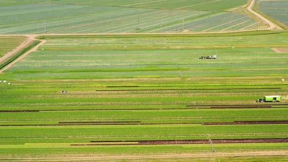 Thumbnail for Agricultural Land with Green Crops From Above