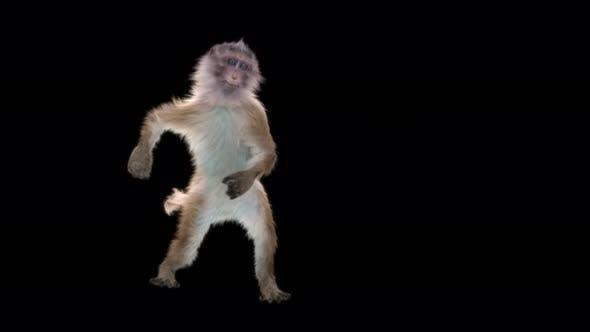 Monkey Dance 4K