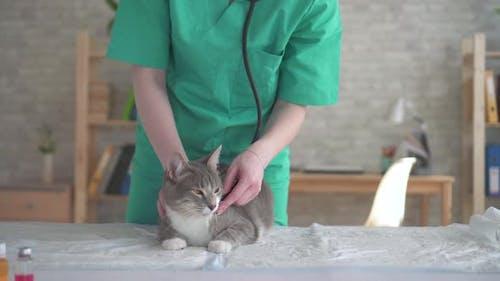 Woman Vet Cat Examination with Stethoscope