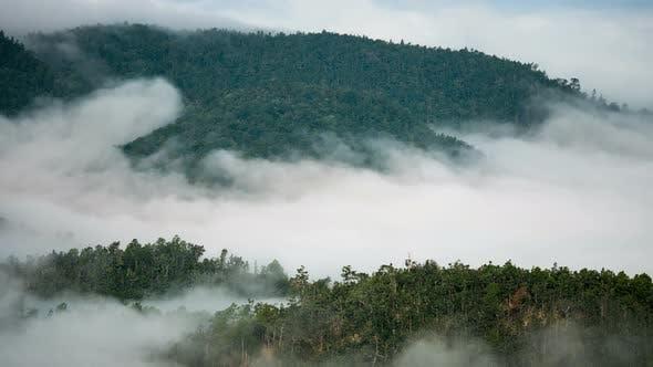 Thumbnail for Fog Forest