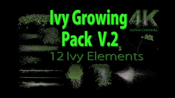 Thumbnail for Ivy Growing Pack 4 K V2