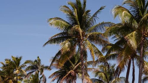 Motion Video Palm Trees On Blue Sky Parallax Effect