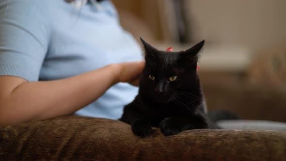 Frau streichelte eine Katze auf der Couch liegend