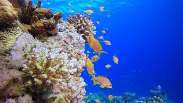 Coral Garden Vibrant Fish
