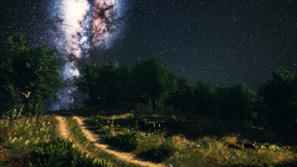 Thumbnail for Green Trees Woods In Park Under Night Starry Sky