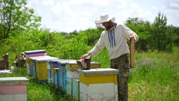 Apiarist examining bees