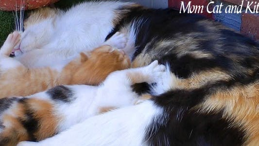Thumbnail for Mom Cat And Kitties 2