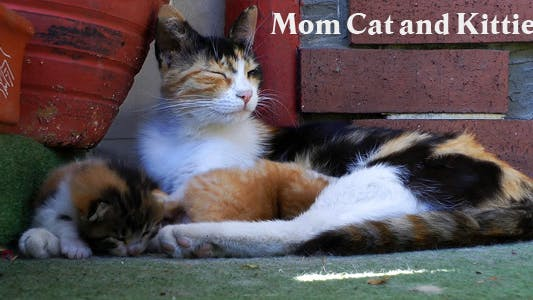 Thumbnail for Mom Cat And Kitties 3