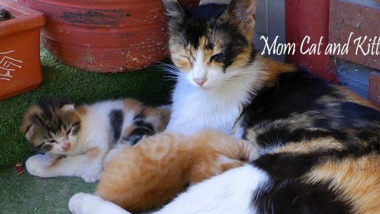 Thumbnail for Mom Cat And Kitties 4