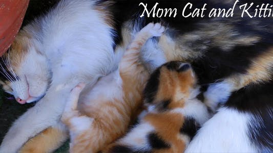 Thumbnail for Mom Cat And Kitties 5
