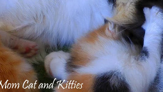 Thumbnail for Mom Cat And Kitties 6