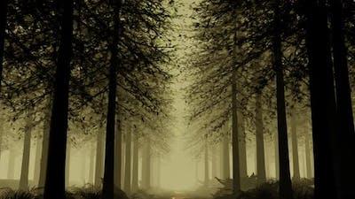 Deep In The Rainforest 01 HD