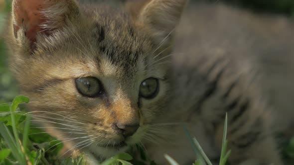 Thumbnail for Gray little kitten playing in the garden close-up 4K 2160p 30fps UltraHD video - Super cute feline r