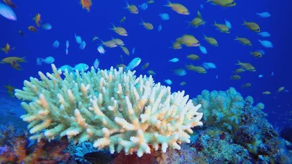 Tropisches Unterwasser buntes Riff
