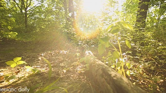 Thumbnail for Nature - Fallen Tree