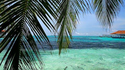 Video Postcard From Maldives
