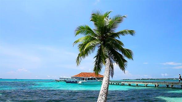 Thumbnail for Maldives Landscape In Daylight