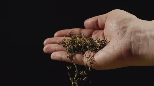 Dried black tea leaves fall from man's palm