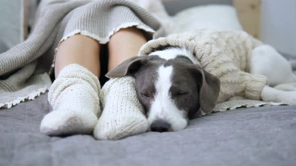 Thumbnail for Female Feet In Knitted Socks And Dog Sleeping On Bed, Coziness Concept