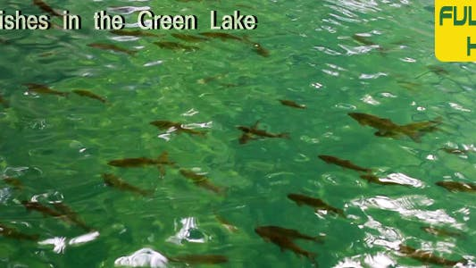 Thumbnail for Fishes In The Green Lake