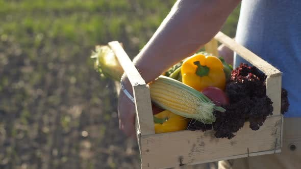 Thumbnail for The Farmer Is Holding a Box of Organic Vegetables