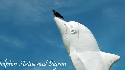 Dolphin Statue And Pigeon