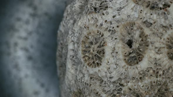Thumbnail for Close up of a coral with details