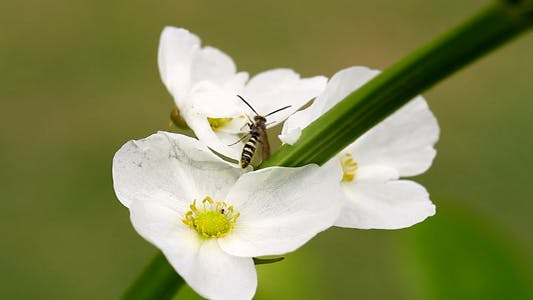 Thumbnail for White Flower And Insects