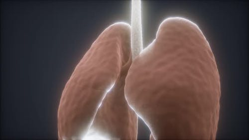 3d Animation of Human Lungs