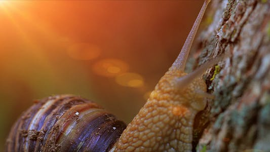 Thumbnail for Snail Closeup In The Rays Of Sun