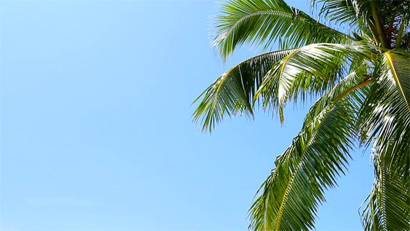 Thumbnail for Tropical Paradise At Maldives With Palm And Sky