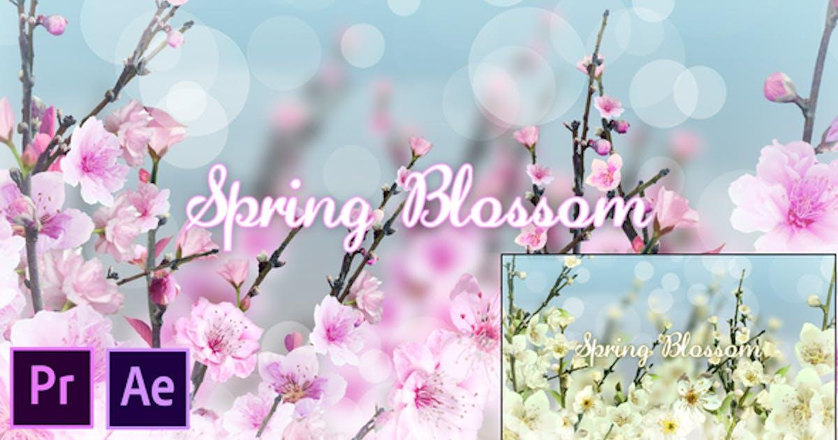Spring Blossom - Premiere Pro