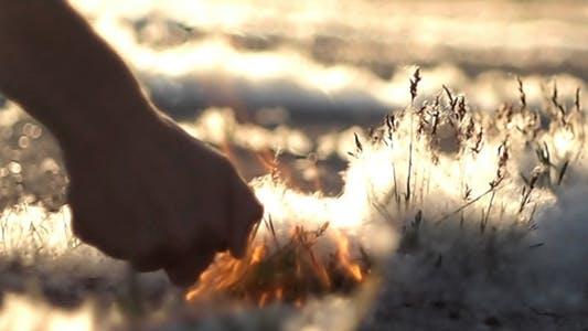 Thumbnail for Boy Sets Fire Poplar Fluff