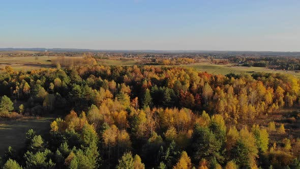 Autumn forest seen from above