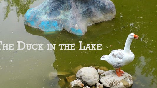 Thumbnail for The Duck In The Lake