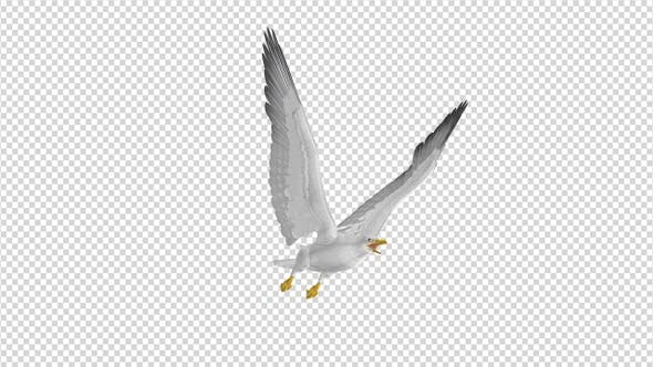 Sea Gull - Flying Loop - Side Angle View