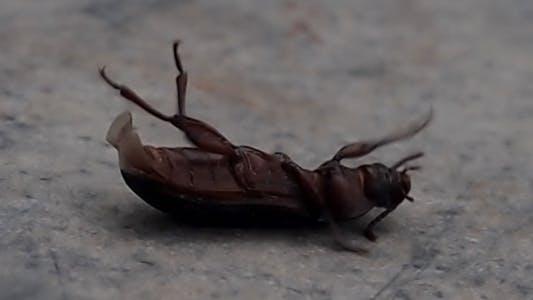 Thumbnail for Käfer versucht sich umzudrehen