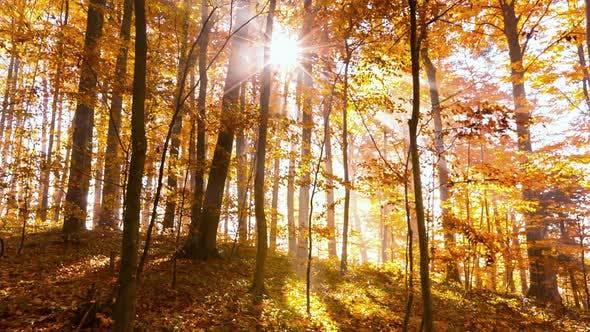 Thumbnail for Herbstbäume