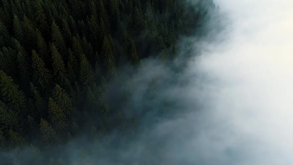 Thumbnail for Flying Through the Clouds and Mist, Forest on Mountain. Beautiful Morning Sunrise Natural Landscape