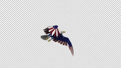 American Eagle - USA Flag - Flying Transition - I