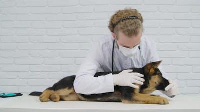 Veterinarian Feeding Dog Feed and Examining Body Dog