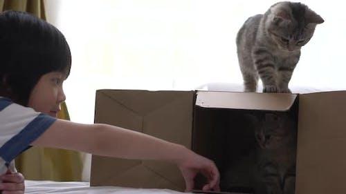 Nettes asiatisches Kind spielt mit Kätzchen zu Hause