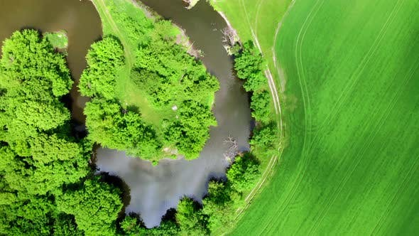Thumbnail for Top Down Aerial Drone Shot of Colorful Green Field and Trees and Small Wriggle River at Sunny Summer