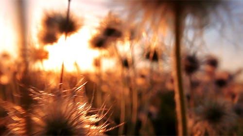 Flauschige Blumen - Sonnenuntergang