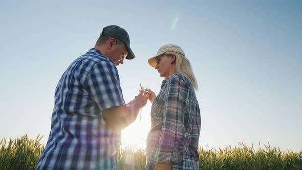 Thumbnail for Two Farmers Are Studying Wheat Ears on the Field