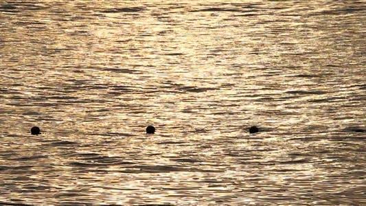 Sunset On Sea Water