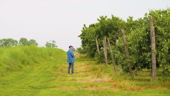 Thumbnail for Male Researcher Looking at Trees While Writing on Clipboard