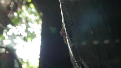 The Spider Web Sun Flare